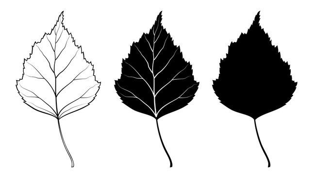 Birch leaf. Vector illustration. Outline, silhouette, line art drawing