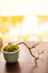 Small plant growing in mini cup over blurred background, tray plant, Japaneses bonsai art