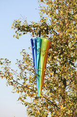 multicolored umbrella hanging in the birch tree at windy weather