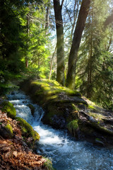 Spring forest Nature background. Natural Mountain landscape background with forest stream...