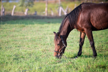 brown horse eating grass on green field