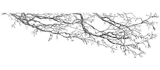 Vector hand drawing branch 2 Fototapete