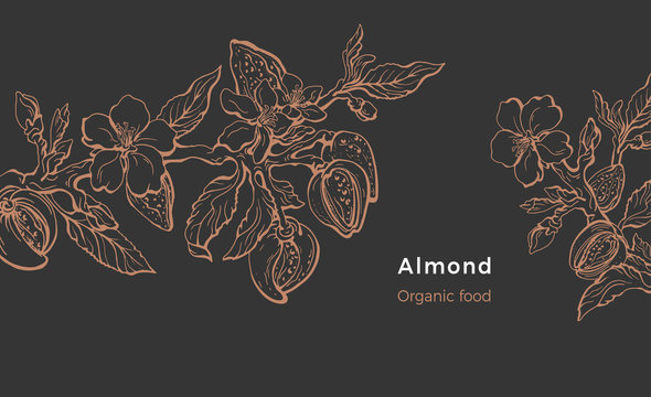 Almond template. Vector natural nut. Organic milk, oil