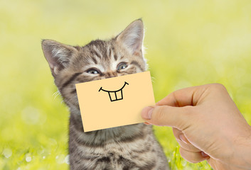 Papier Peint - Funny cat portrait with smile on green grass outdoor