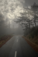 Dark mountain forest road