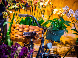 Aluminium Prints Bicycle bike with a basket of flowers