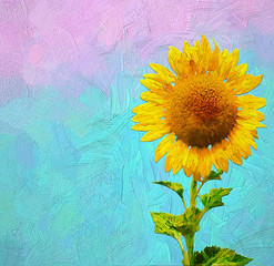 Beautiful sunflower on light blue and pink gradients background. Minimal summer concept.- oil painting