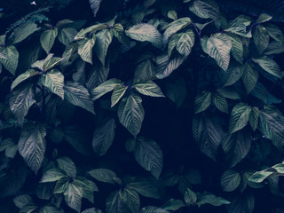 Tropical leaves background. Natural texture wallpaper. Cinematic look of nature.