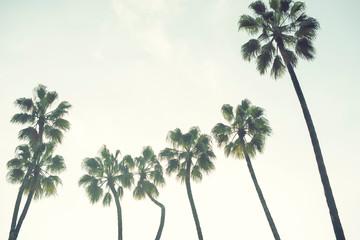 Palm trees over a blue sky minimal backlight