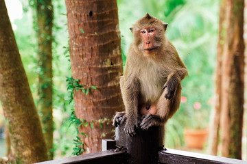 mokey sit on tree stump Wall mural