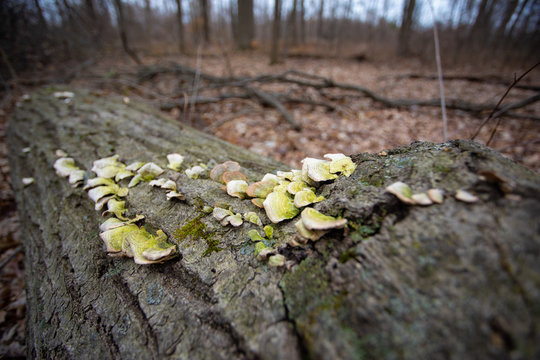 Forest Fungus on a Fallen Tree Trunk