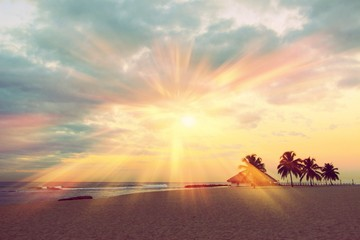 Canvas Prints Roe Colorful sunrise and huge palm trees on the beach in the Dominican Republic