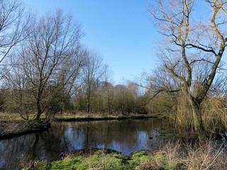 The River Chess, a chalk stream in the Chiltern Hills, Hertfordshire, UK
