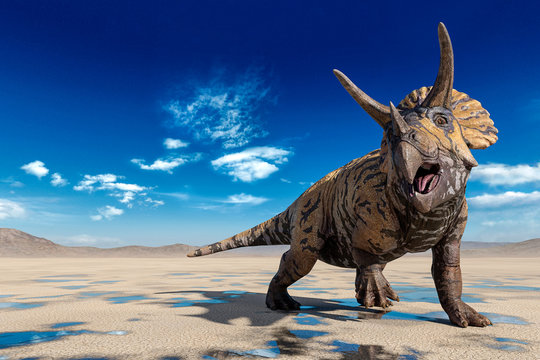 triceratops doing a cool pose on the desert walking after rain