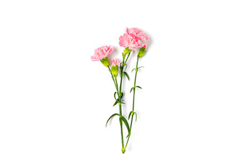bouquet of pink carnation flower isolated on white background Top view Flat lay Holiday card 8 March, Happy Valentine's day, Mother's, Memorial, Teacher's day concept Copy space