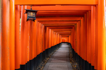 Thousand of red torii gates along walkway in fushimi inari taisha temple is Important Shinto shrine and located in kyoto japan. Japan tourism, nature life, or landscape most visited tourist.