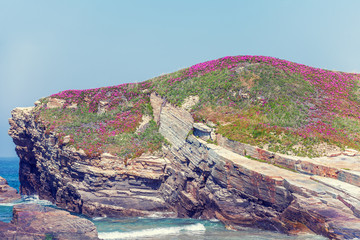 Fototapete - View of the rocky coast. Natural landscape. Rocky beach. Blooming flowers on a rock in spring