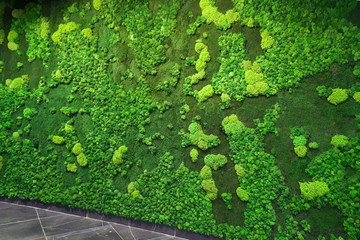 green moss wall in the lobby of a modern office