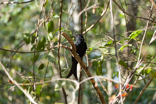 Bird in Madagascars National Park Ankarafantsika