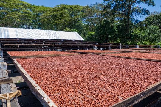 Madagascar cacao farm close to Ambanja