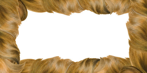 Curls of blond hair of various shades framing borders of picture on white rectangle background. Card or advertising concept. For hair and beauty treatment salon.Banner,copy space