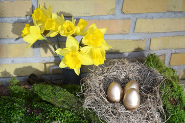 Door stickers Narcissus Arrangement with yellow Daffodil, moss and an nest with golden eggs.