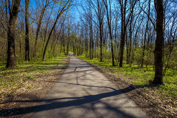 Fototapete - Spring road through deciduous forest in sunny day.  Beautiful landscape.