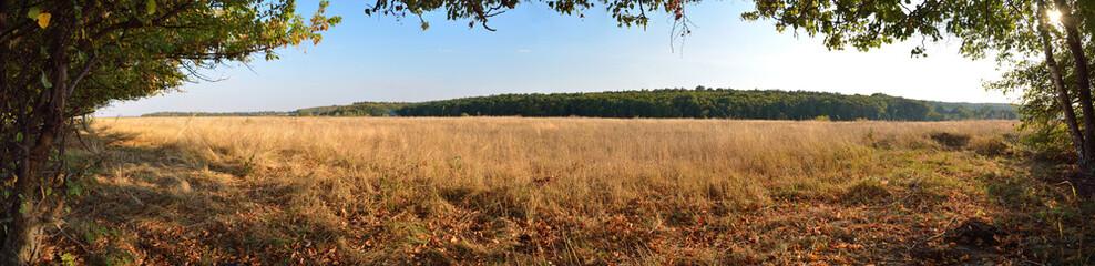 field of dry grass landscape