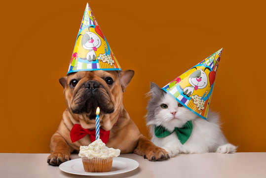 dog and cat on a yellow isolated background celebrate birthday