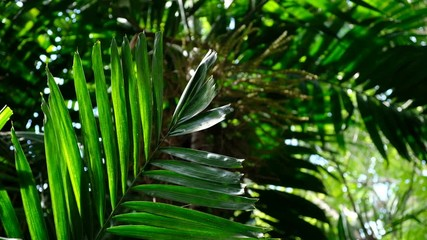 Wall Mural - Palm leaves in the garden Tropical background