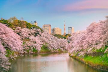 Wall Mural - Chidorigafuchi park during the spring season in Tokyo
