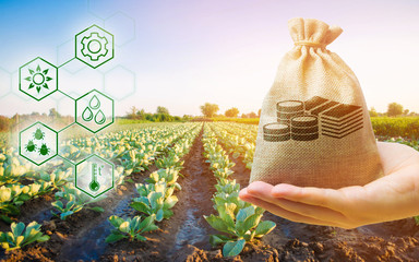 Money bag on the background of agricultural crops in the hand of the farmer. Agricultural startups. Profit from agribusiness. Development of innovation and research agriculture. Investing in farming. Fotomurales