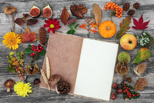Autumn nature study composition with food, flora and fauna with old hemp notebook  on rustic wood background. Top view.