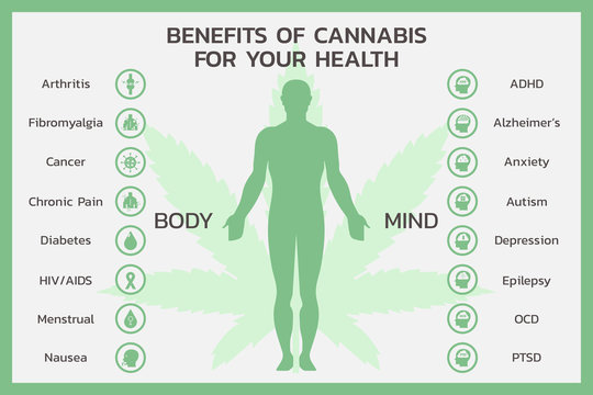 benefits of CBD for body and mind health or Cannabidiol, Cannabis infographic information concept, hemp. flat vector symbol icon illustration design