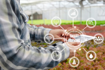 agronomist or farmer using tablet for research and analysis data development with visual icon , organic hydroponic vegetable in greenhouse farm, digital technology agriculture, smart farming concept Fotomurales