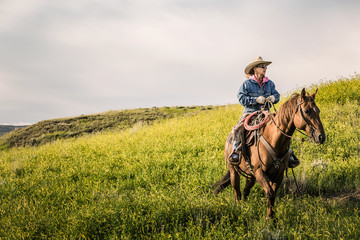 Cowgirl on her horse standing in fields ready to herd cattle. Cody, Wyoming, USA