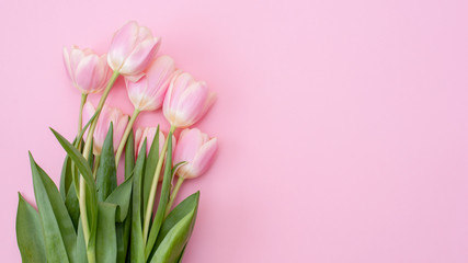 Tuinposter Tulp 8 March Happy Women's Day. Pink tulips on pink background.