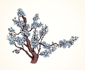 Spring flowering tree. Vector drawing