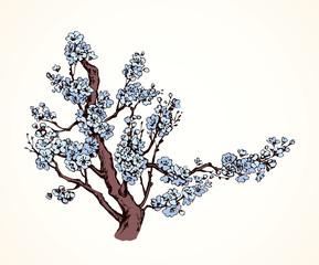 Spring flowering tree. Vector drawing