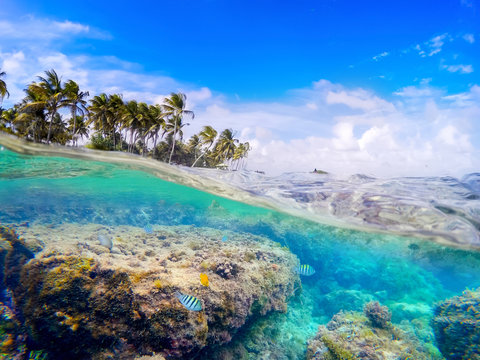 Split underwater view of La Caravelle shore in Guadeloupe