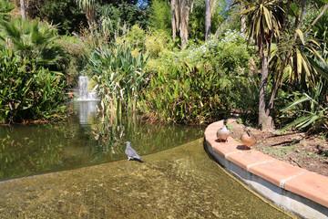 botanical garden - water birds