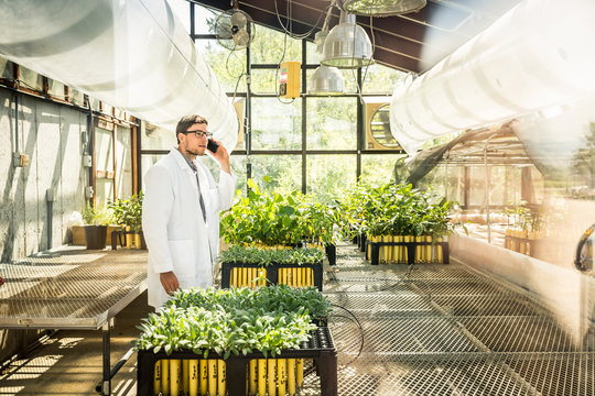 Biologist on a cell phone in greenhouse lab, inspecting plants. Montana, USA