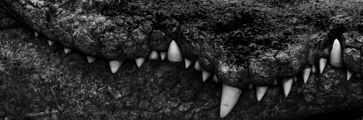 White teeth of a large crocodile