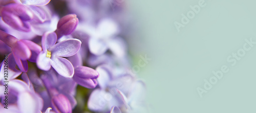 Background or banner with lilac flowers and copy space