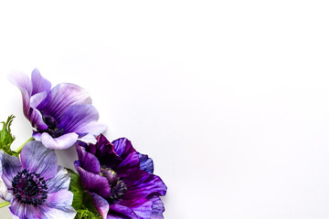 アネモネとヒヤシンス 紫の花の背景素材