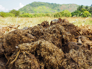 elephant dung in the field