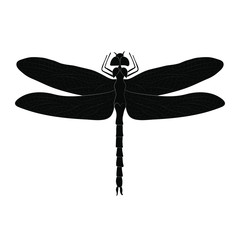 Dragonfly silhouette isolated on white background. Vector.