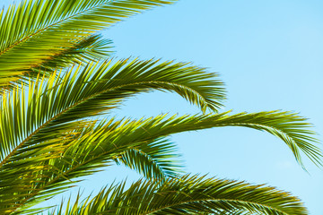 Tropical palm leaves close up