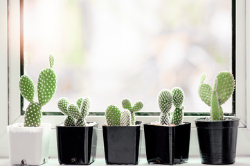 Foto op Plexiglas Cactus Collection of various cactus and succulent plants in different pots on window sill.