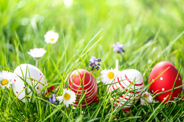 easter eggs in grass and flowers background